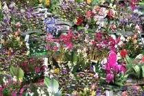 mastrovito-andrea-enciclopedia-dei-fiori-da-giardino-2009-carta-patinata-cm-240x180-museo-del-novecento2.jpg