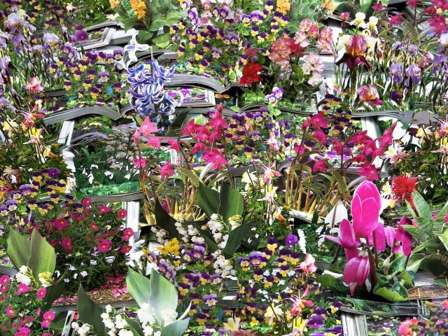 mastrovito-andrea-enciclopedia-dei-fiori-da-giardino-2009-carta-patinata-cm-240x180-museo-del-novecento4.jpg