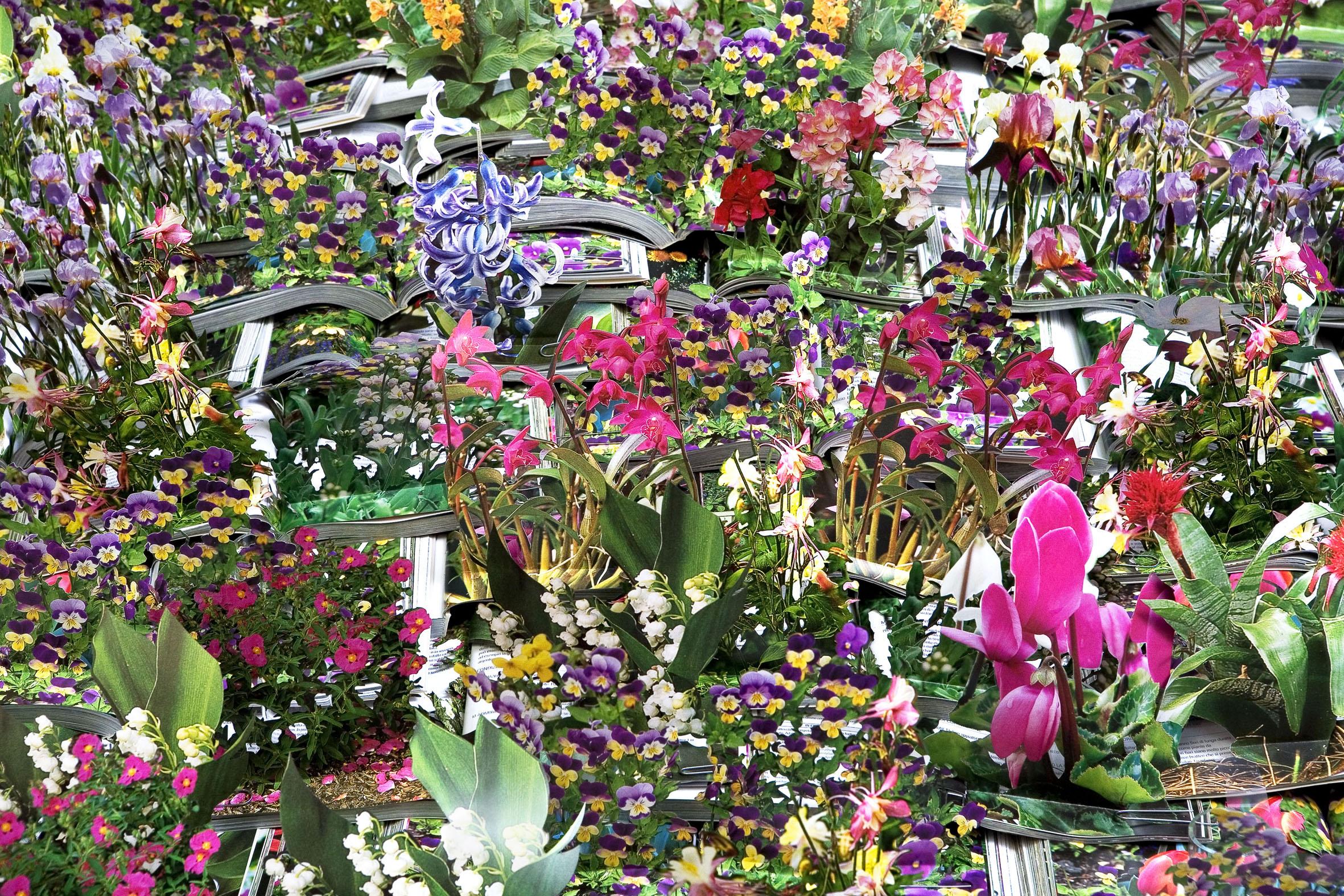 Museo del novecento di milano una mostra per conoscere le nuove tecniche dell arte - Fiori di giardino foto ...