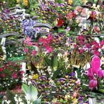 Mastrovito Andrea Enciclopedia dei fiori da giardino, 2009 carta patinata cm 240x180 Museo del Novec