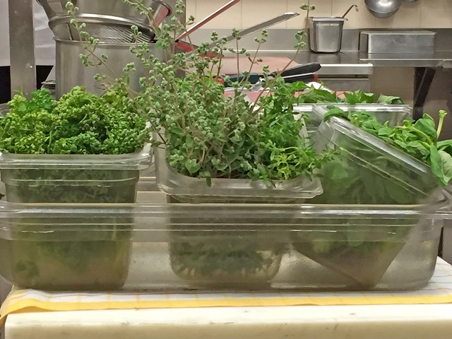 Fresh herbs - Photo by Margie Miklas