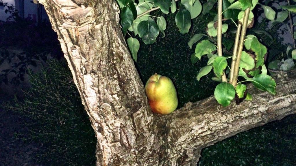 Pear Tree at Le Miniature