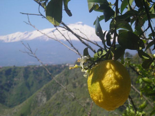 Lemons by Sarah Kearney