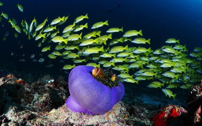 Reef_Maldive_colours