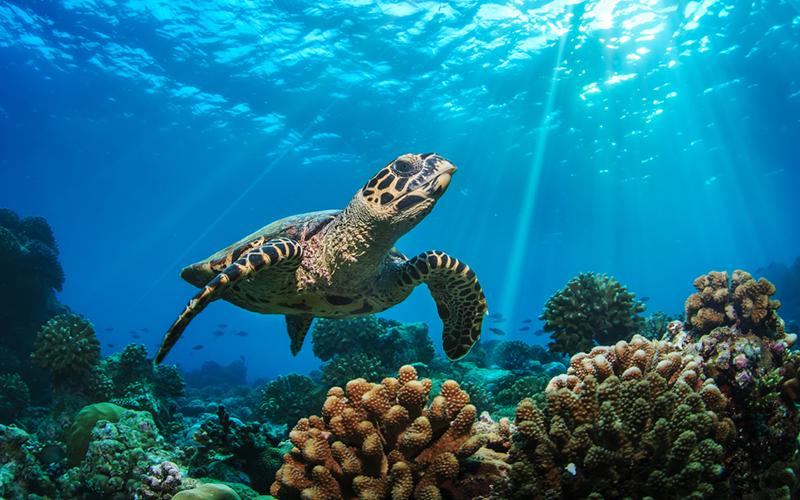 Snorkeling_adventure_Maldives