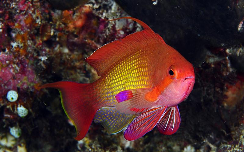 Reef_Maldive